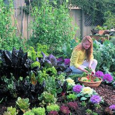 cool-season kitchen garden - a guide to starting vegetables for autumn and winter harvest
