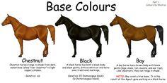 Equine Colours- Base Colours by ~Kholran on deviantART