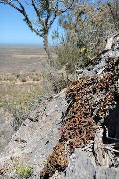 aloe castilloniae - Google Search Habitats, Wild Flowers, Madagascar, Amazing, Google Search, Wildflowers