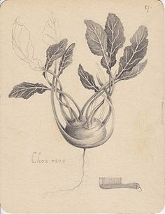 Joanna Concejo #drawing #botanical