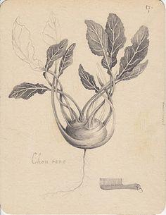 {<3} Joanna Concejo. Botanical drawing kohlrabi