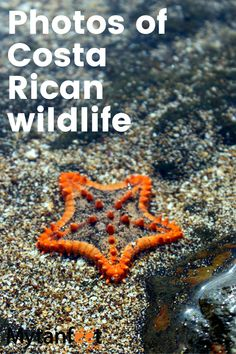 Living In Costa Rica, Costa Rica Travel, Beach Town, Summer Of Love, Under The Sea, Travel Tips, Things To Do, Exotic, Wildlife