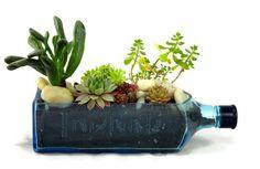 Bombay Sapphire Blue Gin bouteille jardin planteur succulentes Kit - Kit complet