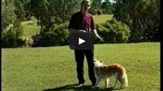 Training for dog