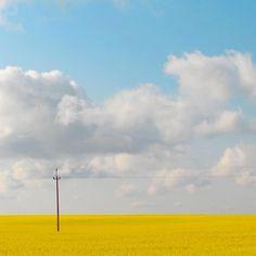 yellow canola fields of North Dakota Landscaping Las Vegas, Landscaping Rocks, Canola Field, University Of North Dakota, Scenic Photography, Stunning Photography, Landscape Photography, Mellow Yellow, South Dakota