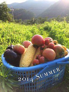 2014 夏の収穫