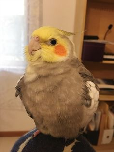 Parrot Post