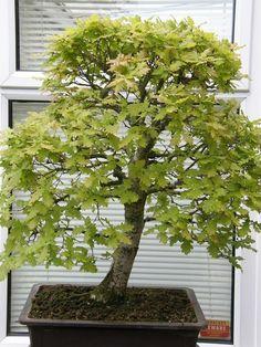 Bonsai Trees Garden (13)