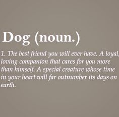 Sally the Border Collie~Ellie the Pug~Daisy the Hamster~Forever Pets that will be in my Heart All Dogs, I Love Dogs, Puppy Love, Cute Dogs, Dog Rules, Animal Quotes, Girls Best Friend, Dog Best Friend Quotes, Dog Mom