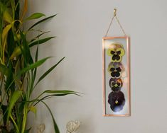 Real pressed flower wall hanging  pansy ombre  copper and