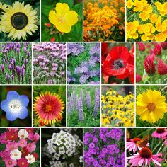 """Our """"Bee's Knees"""" Pollinator Wildflower Seed Mix is packed with 18 different species that are suited for pollinators of all types! Bees, birds, and butterflies flock to the colorful gardens in which this mix is sowed. Buy a little for a small garden for our winged friends, or buy in bulk to save!"""