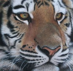 Kerry Newell - Wildlife Artist - Home Page
