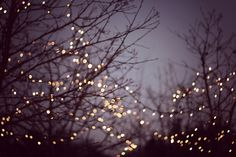fairy lights outdoors - Buscar con Google