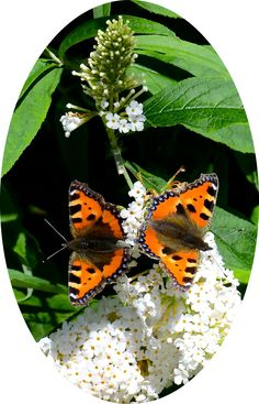Kleine vos op vlinderstruik