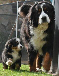 I want a big dog so bad!!!!