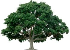 tree | Trusted Name In Tree & Landscape Care
