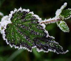 Frost © Sabine Coe #frost #winter #photography http://sabinecoephotography.co.uk/winter-wonderland/