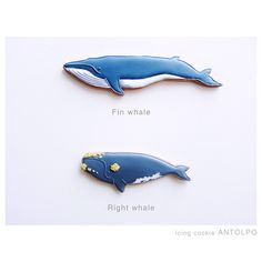 WHALE COOKIES | Fin whale, Right whale