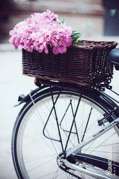 Pink peonies, spring flowers in decorated bicycle basket. Bike with basket. Roverista.com