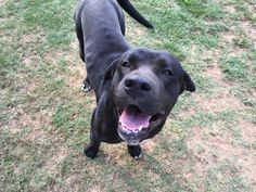 Found Dog - Mix - Auburn, GA, United States