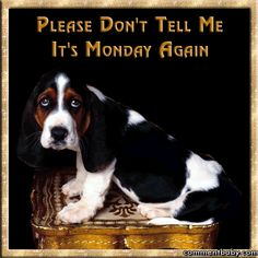 Please don't tell me it's Monday again.... monday i hate monday monday greeting monday gif monday quote
