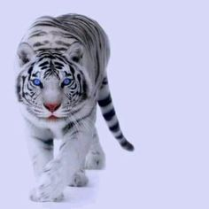 Now playing: Survivor - Eye of the Tiger