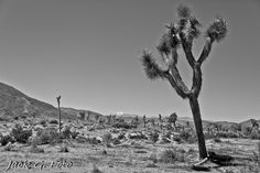 #Joshua Tree Getaway