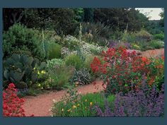 arid garden - probably the Denver Botanical Garden.  Like the centranthus and catmint, the cactus, calyophus, verbascum, yucca.  And a lot of other cool ones I wish I could discern