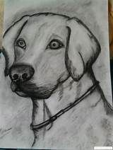 Seguir leyendo... Cute Drawings Of Love, Cute Kawaii Drawings, Art Drawings Sketches Simple, Animal Sketches, Dog Pencil Drawing, Pencil Art Drawings, Horse Drawings, Animal Drawings, Animal Paintings