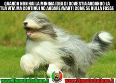 L'ottimismo dell'ignoto #vignetteitaliane.it #vignette #italiane #immagini #divertenti #lol #funnypics #umorismo #humour #humor #ridere #risate #cani