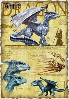 White Dragons, the smallest of all dragons in the Dragonlance universe, are Chromatics, which means that they are evil by nature. The White Dragon makes up for its small size with an aggressive nature and freezing breath.