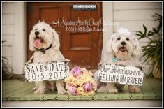 SAVE the DATE Sign Set for the DOGS , Our Humans Are Getting Married, Vintage Photography , Photo Props , Vintage Wedding Signs on Etsy, $59.00