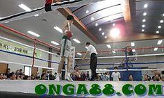 honeypick♠️♠️♠️ONGA88.COM♠️♠️♠️honeypick: 123bet♦️♦️♦️ONGA88.COM♦️♦️♦️123bet Basketball Court, Wrestling, Sports, Lucha Libre, Hs Sports, Sport