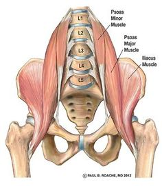 Yoga and Your Hips, Part II | Jason Crandell Vinyasa Yoga Method