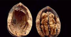 Etrange mais vrai ! La plus haute autorité américaine de contrôle des produits alimentaires considère les noix comme des drogues illicites !!!