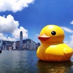Ducky at Hong Kong.