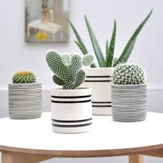 Can pain ceramic pots like this. Like neutral color stripes theme for pots.