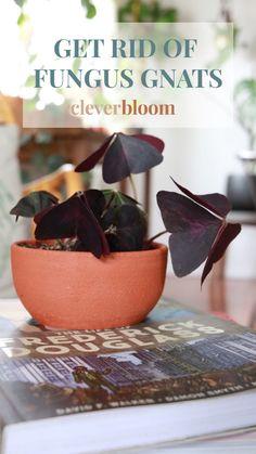 Plants Indoor, Plant Care, Pest Control, Fungi, House Plants, Outdoor Gardens, Garden Design, Succulents, Planter Pots