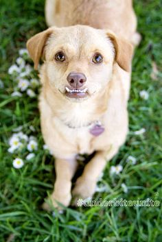 This is Daisy: | You Should Know And Love Daisy The Underbite Dog