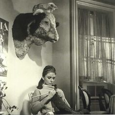 Audrey Hepburn knits under the watchful eye of a cat atop the head of a bull. Anyone know more about this shot? For Hidama, via mlkshk.