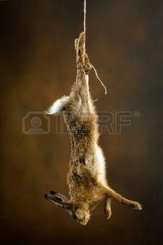 Afbeeldingsresultaat voor haas aan touw
