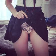 Is that a kitten purring in your panties or are you just happy to see me? Comfortable and fashionable, these frisky panties come with a cute kitty cat plastered on the front and make the purrfect pair of undergarments for a crazy exhibitionist cat lady. Mode Bizarre, Tv Movie, Shorty, Hot Lingerie, Culottes, Cat Face, Leggings, Aliexpress, Ideias Fashion