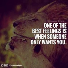 Sadly you had feelings still for ex and other bois. You made it seem you liked idea of us but not us as what yoi claimed Soulmate Love Quotes, Wise Quotes, Words Quotes, Sayings, Lioness Quotes, Lion Love, Warrior Quotes, Short Inspirational Quotes, Badass Quotes