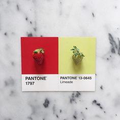 #pantoneposts by lucialitman