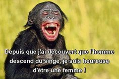 joie et contentement ! Everything Funny, English Quotes, Funny Cute, Proverbs, Monkey, Haha, Humor, Animals, French