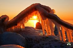 """""""Fire 'n' Ice""""<br /> <br /> This iced branch came to life along the North Shore of Lake Superior. As the sun rose above the lake's steam devils, the icy formation looked like flames; a stark contrast to the frigid subzero temps that morning."""