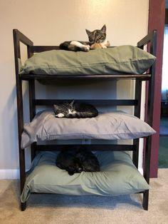 3 old pillows plus a bookshelf equals instant cat bunk beds. 3 old pillows plus a bookshelf equals instant cat bunk beds. Cat Bunk Beds, Pet Beds, Old Pillows, Cat Enclosure, Cat Room, Pet Furniture, Luxury Furniture, Modern Furniture, Furniture Design