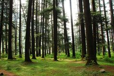 Nature Park in is a grand exhibition of unspoiled Himalayan deodar forest planted right inside the town! Forest Plants, India Tour, Places Of Interest, Himalayan, Wander, Old Things, Tours, River, Fantasy