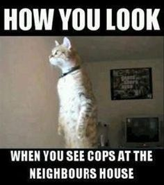 #CatLover #ILoveMyCat #CatFunny #FunnyCatMemes