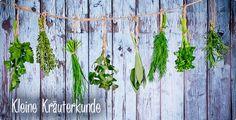 Kräuterkunde - Google-Suche Kraut, Herbs, Plants, Gardens, Google, Medicinal Plants, Search, Outdoor Gardens, Herb